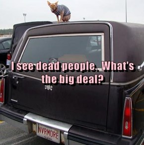 I see dead people.  What's the big deal?