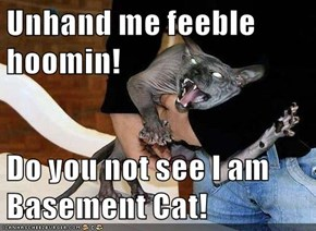 Unhand me feeble hoomin!  Do you not see I am Basement Cat!