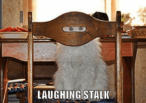 LAUGHING STALK