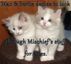 Mac & Bertie decide to look  through Mischief's stuff for clues.