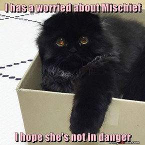 I has a worried about Mischief  I hope she's not in danger