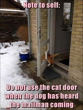 Note to self:  Do not use the cat door when the dog has heard the mailman coming