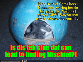 Mischief's brubby Mac may hab found an important clue in the Globe dat Mischief used to play wiff!