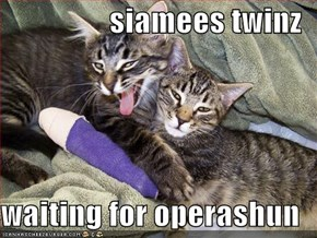 siamees twinz  waiting for operashun