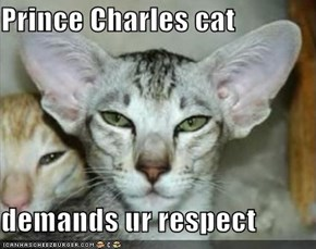 Prince Charles cat  demands ur respect