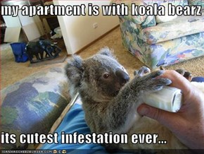 my apartment is with koala bearz  its cutest infestation ever...