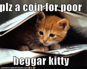 plz a coin for poor  beggar kitty