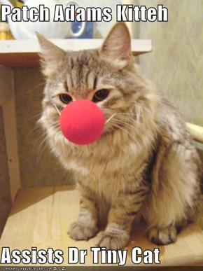 Patch Adams Kitteh  Assists Dr Tiny Cat