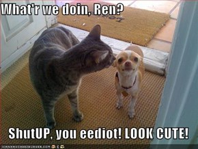 What'r we doin, Ren?  ShutUP, you eediot! LOOK CUTE!