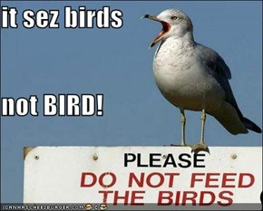it sez birds not BIRD!