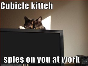 Cubicle kitteh  spies on you at work