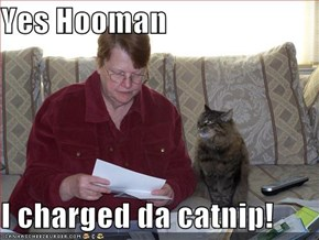 Yes Hooman  I charged da catnip!