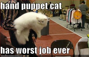 hand puppet cat  has worst job ever