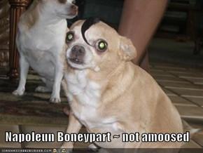 Napoleun Boneypart ~ not amoosed