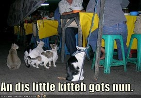 An dis little kitteh gots nun.