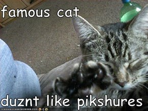 famous cat  duznt like pikshures