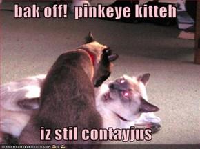 bak off!  pinkeye kitteh  iz stil contayjus