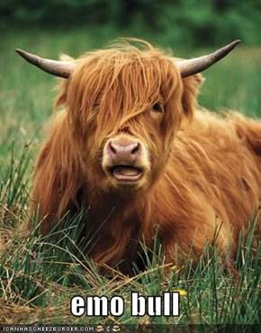 emo bull