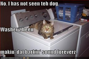 No, I has not seen teh dog. Washer'z been makin' dat barkin' sound foreverz.