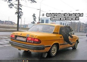 Quick!  Follow that cab full of salmon and step on it!