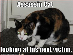 Assassin Cat  looking at his next victim.