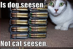 Is dog seesen.  Not cat seesen.