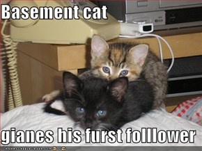 Basement cat   gianes his furst folllower