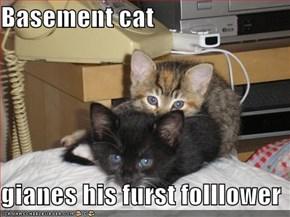 Basement cat   gianes his furst folllower