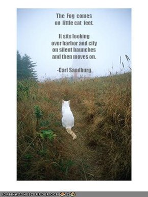 The  Fog  comeson  little cat  feet.It sits looking over harbor and city on silent haunchesand then moves on.-Carl Sandburg