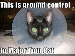 This is ground control  to Major Tom Cat