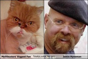 Mythbusters' Biggest Fan TotallyLooksLike.com Jamie Hyneman