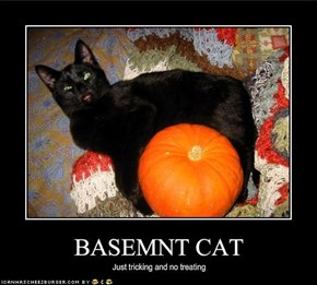 BASEMNT CAT