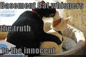 Basement Cat whispers  the truth  to the innocent