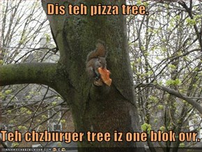 Dis teh pizza tree.     Teh chzburger tree iz one blok ovr.