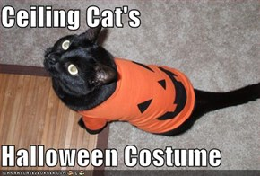Ceiling Cat's  Halloween Costume