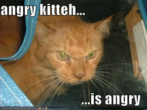 angry kitteh...  ...is angry