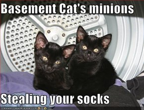 Basement Cat's minions  Stealing your socks