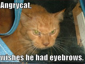 Angrycat,  wishes he had eyebrows.