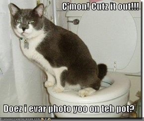 C'mon! Cutz it out!!!  Doez i evar photo yoo on teh pot?