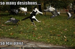 so many desishuns....  so few pawz...