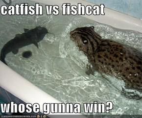 catfish vs fishcat  whose gunna win?