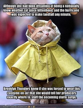 Although she had been dreaming of being a nationally know weather cat since kittenhood, and the hurricane was expected to make landfall any minute,