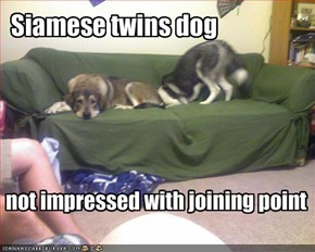 Siamese twins dog