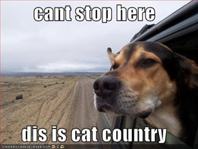 cant stop here  dis is cat country