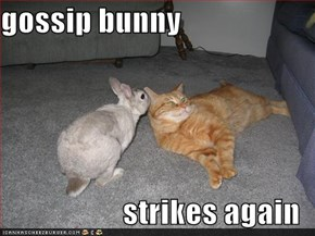 gossip bunny  strikes again