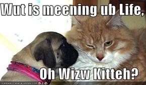 Wut is meening ub Life,  Oh Wizw Kitteh?