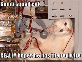 Bomb squad cat  REALLY hopes he has the red wire