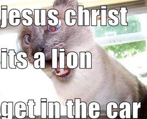 jesus christ  its a lion get in the car