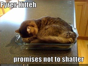 Pyrex Kitteh  promises not to shatter