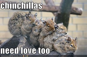 chinchillas   need love too